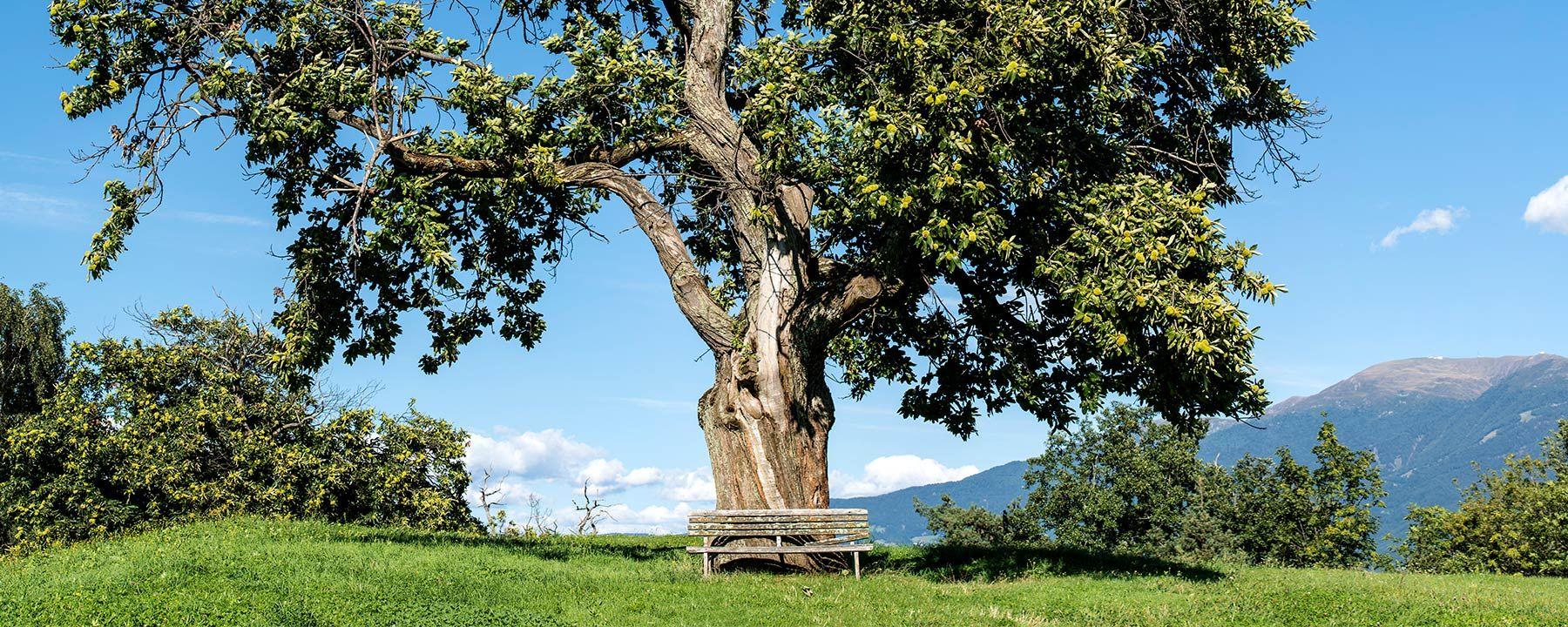 Frühlingswanderung im Eisacktal in Südtirol
