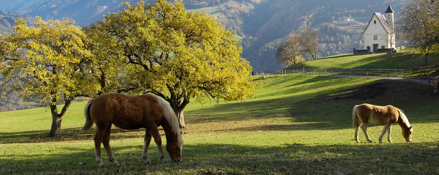 Herbstwandern in Südtirol